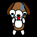 beagle-dog_shock