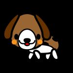 beagle-dog_side