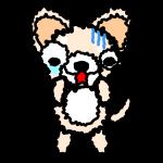 chihuahua_fear