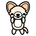 chihuahua_sad