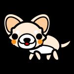 chihuahua_side