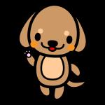 dachshund_enjoy