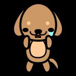 dachshund_sad