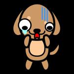 dachshund_shock
