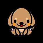 dachshund_sit