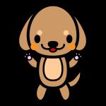 dachshund_stand