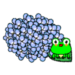 hydrangea_03-frog-handwrittenstyle01