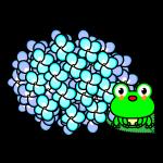 hydrangea_03-frog-pl01