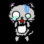 persian-cat_fear