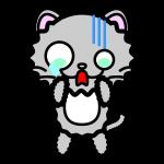 persian-cat_shock