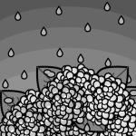 rainyseason_01-hydrangea01-monochrome