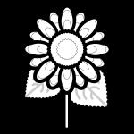 sunflower_01-blackwhite
