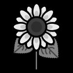 sunflower_01-monochrome