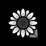 sunflower_02-monochrome