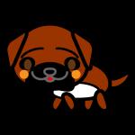 tosa-dog_side