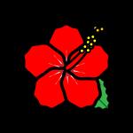 hibiscus_02