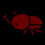 beetle_01-side