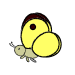 butterfly_colias-side-handwrittenstyle
