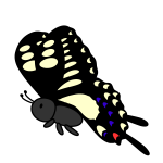 butterfly_swallowtail-side