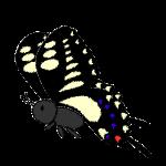 butterfly_swallowtail-side-handwrittenstyle