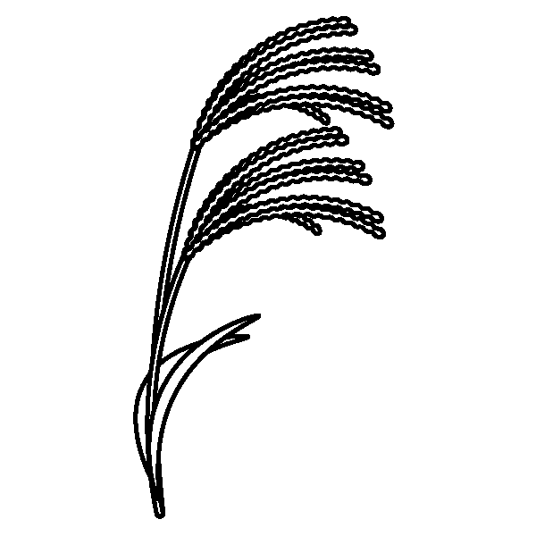 Japanese-pampas-grass_01-blackwhite