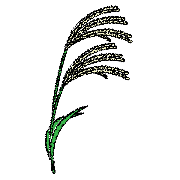 Japanese-pampas-grass_01-handwrittenstyle