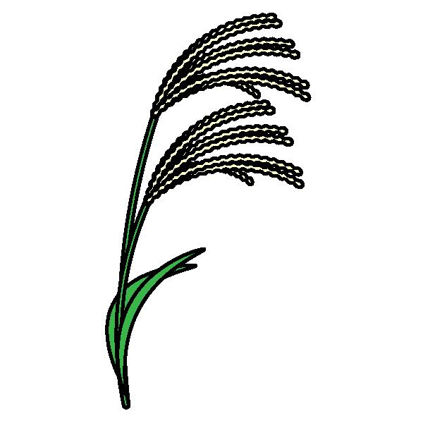 Japanese-pampas-grass_01