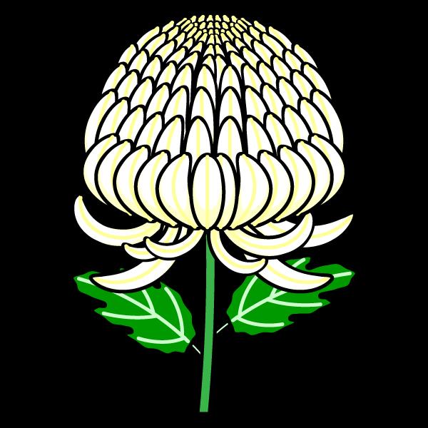 かわいい菊の無料イラスト・商用フリー