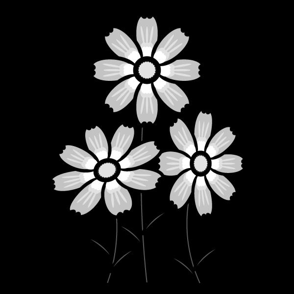 cosmos_01-monochrome