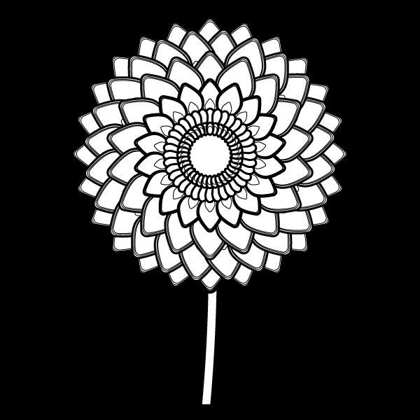 dahlia_01-blackwhite