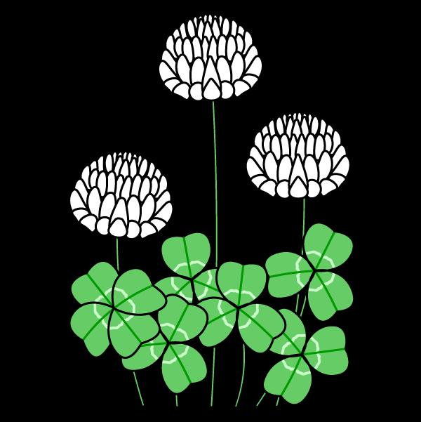 かわいい白詰草(クローバー)の無料イラスト・商用フリー