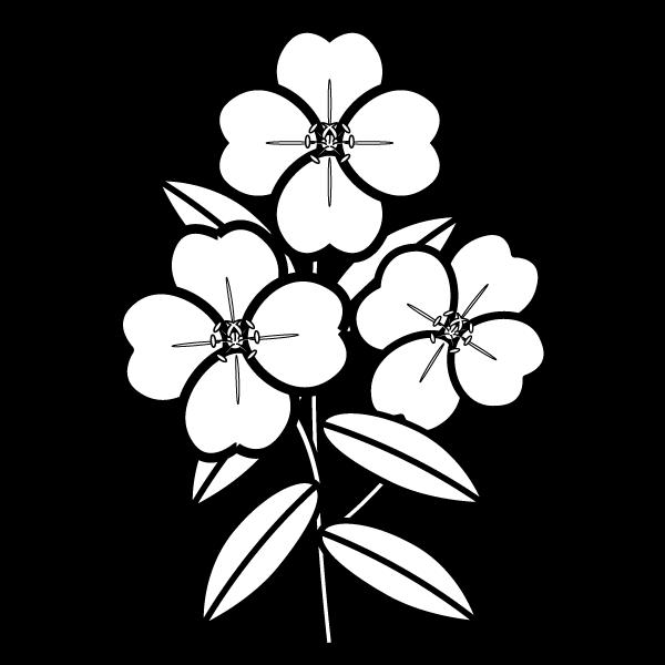 evening-primrose_01-blackwhite