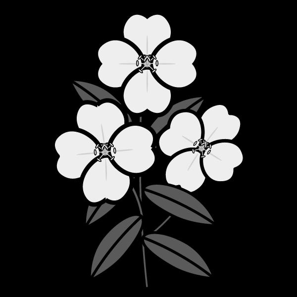 evening-primrose_01-monochrome