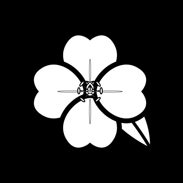 evening-primrose_02-blackwhite