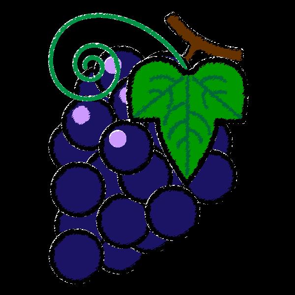 grape_02-handwrittenstyle