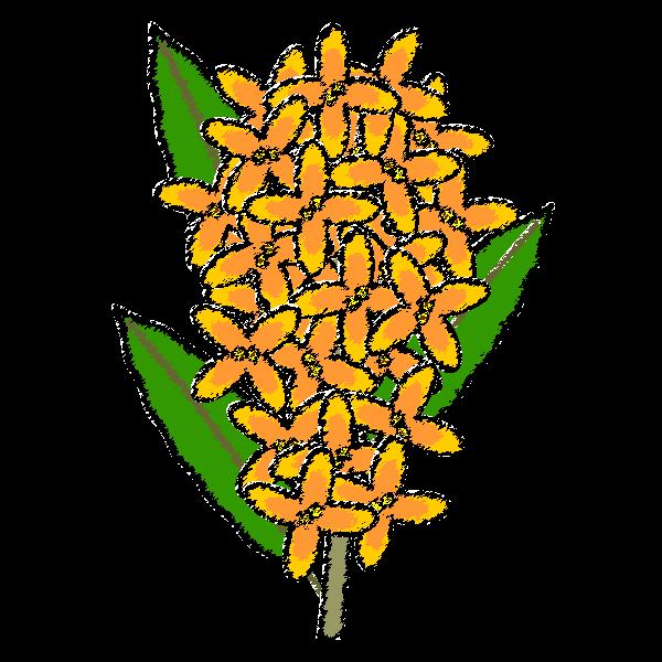 osmanthus-fragrans_01-handwrittenstyle