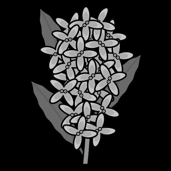 osmanthus-fragrans_01-monochrome