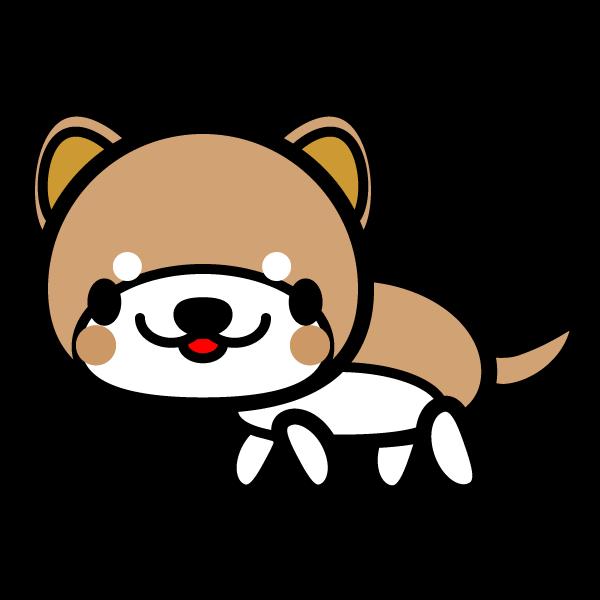shiba-dog_side