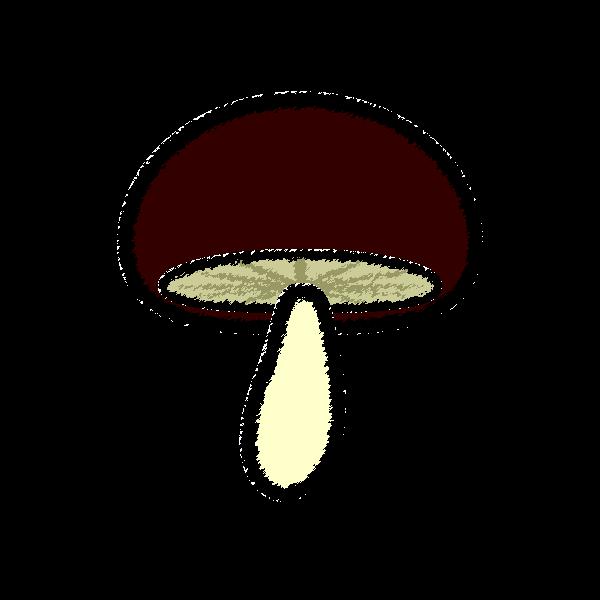 shiitake-mushroom_01-handwrittenstyle