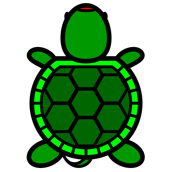 tortoise_01-top