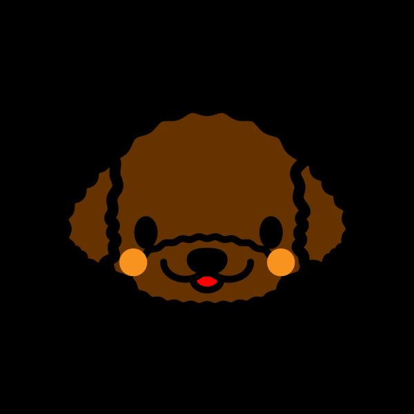 toy-poodle_face