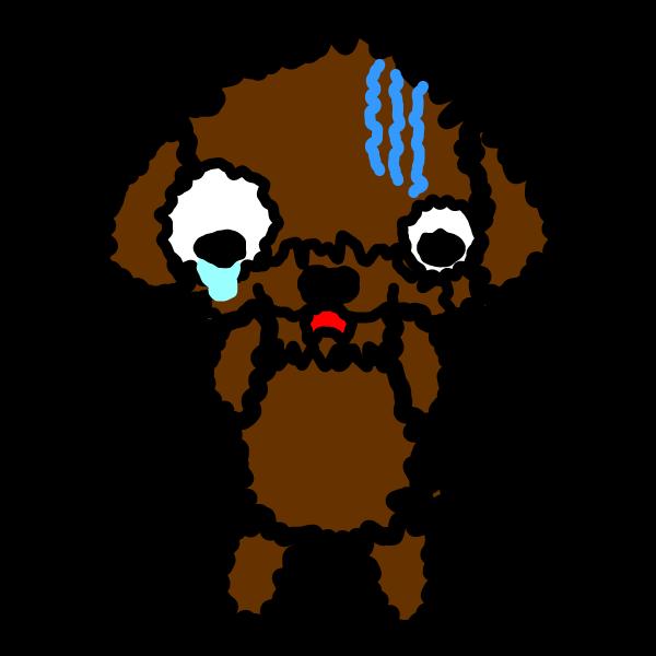 toy-poodle_fear