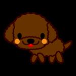 toy-poodle_side-soft